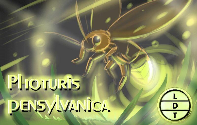 Episode 28 – Photuris Firefly: From Dusk Till Dawn