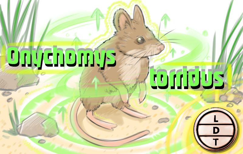 Episode 33 – Southern Grasshopper Mouse: The Wasteland Warrior