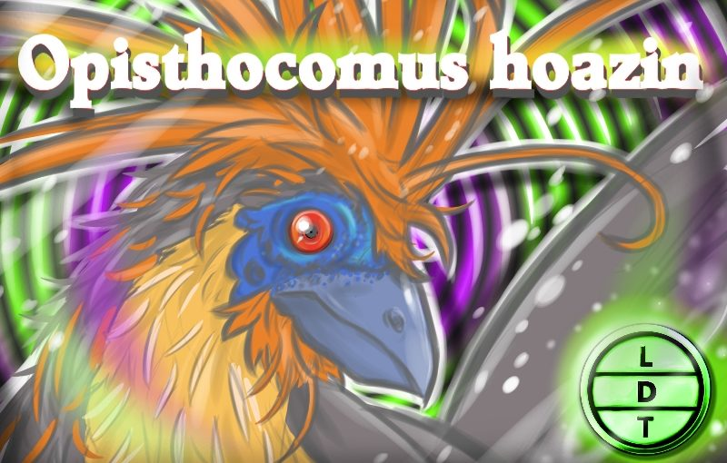 Episode 30 – Hoatzin: The Fowl-Smelling Tree Cow