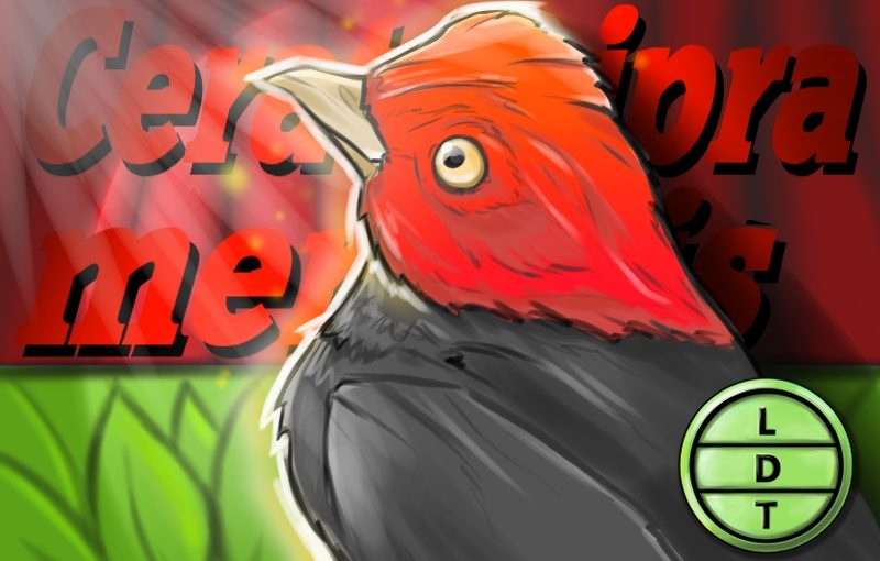 Episode 77 – Red-Capped Manakin: The Moonwalking Glitch Bird